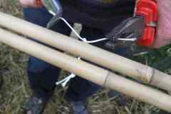 Bambus09_03